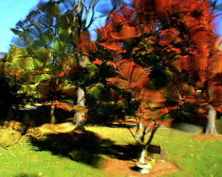 Autumn Refraction by Charles Shedd