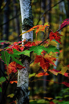 Autumn Remembered by Gary Harris