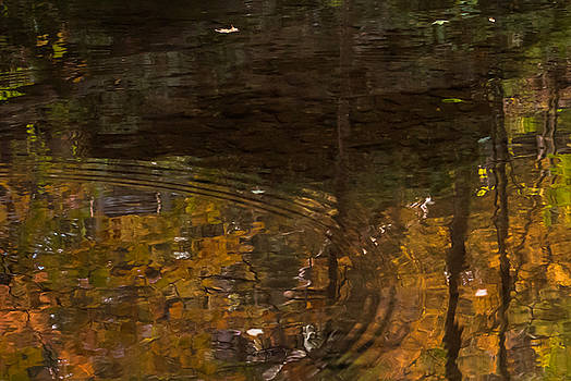 Terry DeLuco - Autumn Ripples Abstract