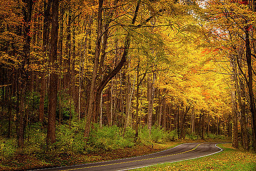 Autumn Road by Andrew Soundarajan