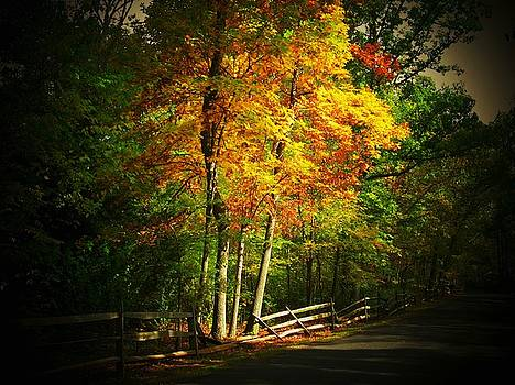 Autumn Road by Joyce Kimble Smith