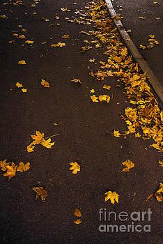 Svetlana Sewell - Autumn Road
