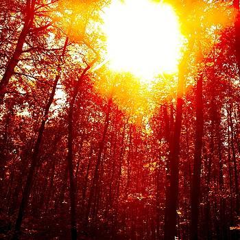 Autumn by Roman Aj