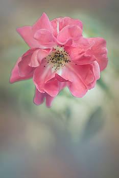 Elvira Pinkhas - Autumn Rose