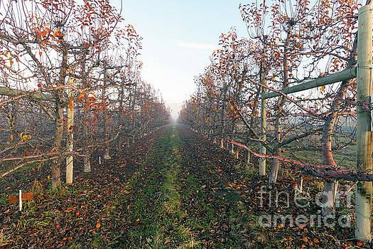 Autumn Rows by Mike Dawson