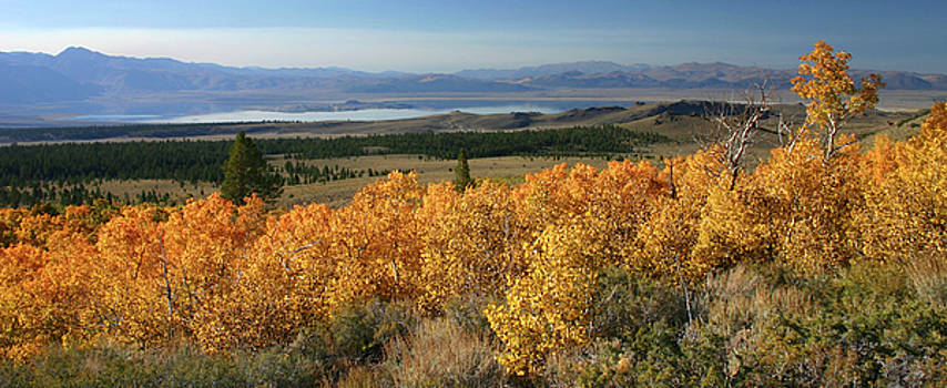 Autumn, Sagehen Meadow by Tom Kidd