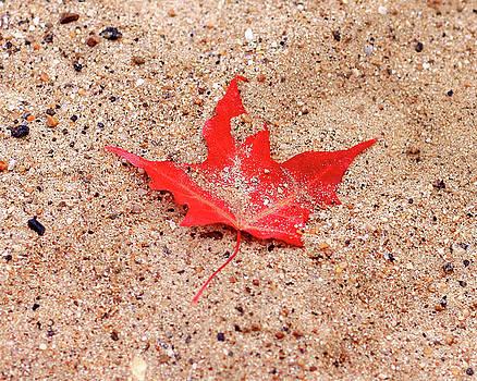 Autumn Sand by Brian Pflanz