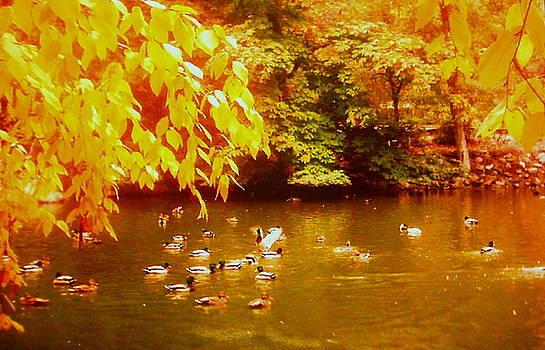 Shasta Eone - Autumn Serenity