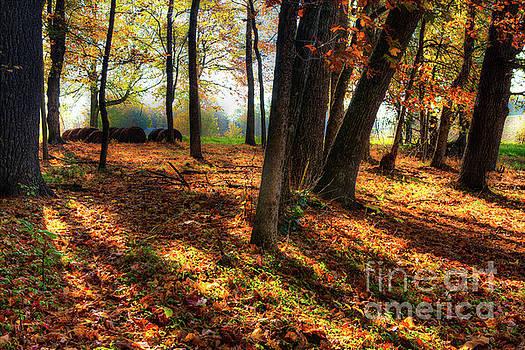 Dan Carmichael - Autumn Shadows in the Blue Ridge