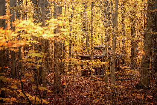 Autumn Shelter by Victoria Winningham