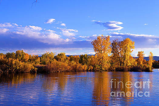 Autumn Shimmering by Barbara Schultheis