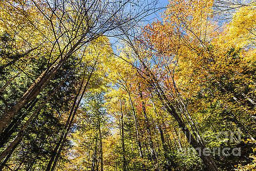 Autumn Skies by Anthony Baatz