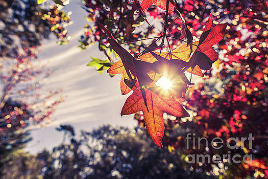 Autumn sky and colorful leaves in fall season with sun shine on  by Jingjits Photography