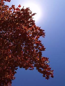 Autumn Sky I by Anna Villarreal Garbis