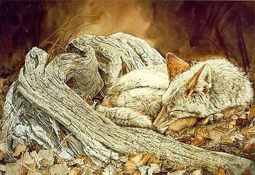 Autumn Slumber by Judith Angell Meyer