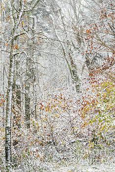 Autumn Snow Cranberry Wilderness by Thomas R Fletcher