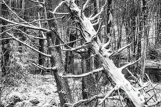 Autumn Snow in Black and White by Thomas R Fletcher