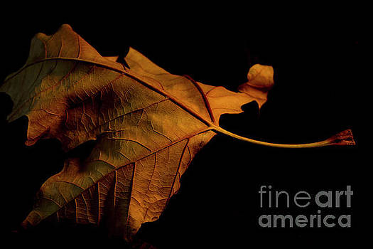 Autumn Solitary Leaf by Ivete Basso Photography