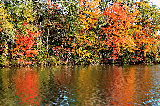 Autumn Splendor by Francie Davis