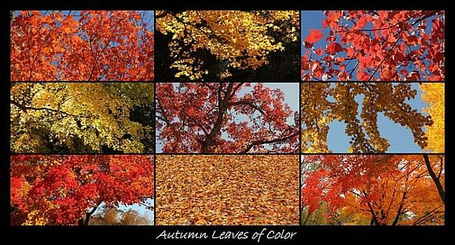 Rosanne Jordan - Autumn Splendor of Leaves