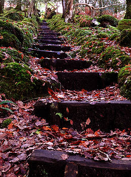 Autumn Steps   by Lee Hilliard