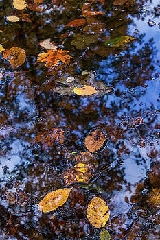 Autumn Stream, New England Fall Foliage Abstract by Skyektte Photography by Linda Rasch
