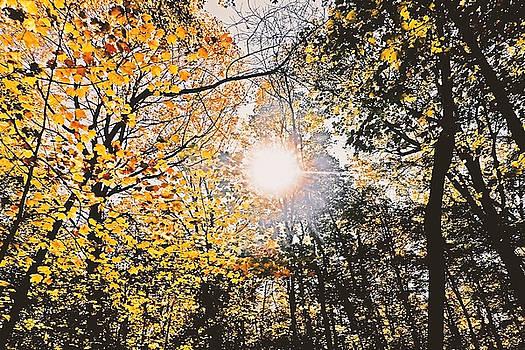 Autumn Sun by Asbed Iskedjian