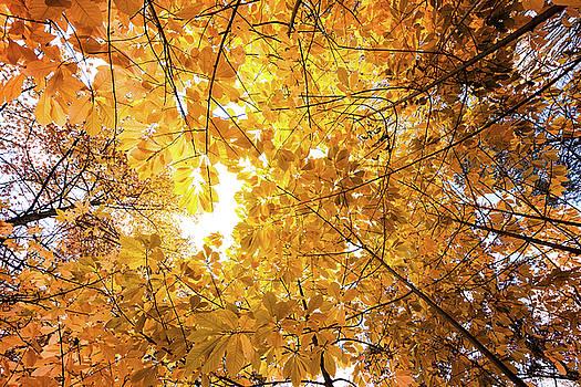 Autumn Sun by David Oakill