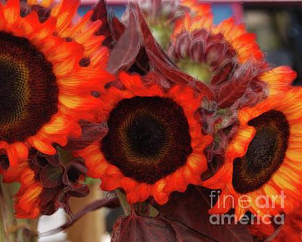 Autumn Sunflowers by Sharon Kalstek-Coty