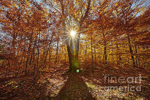 Jonathan Welch - Autumn Sunlight