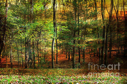 Autumn Sunset - In The Woods by Judy Palkimas