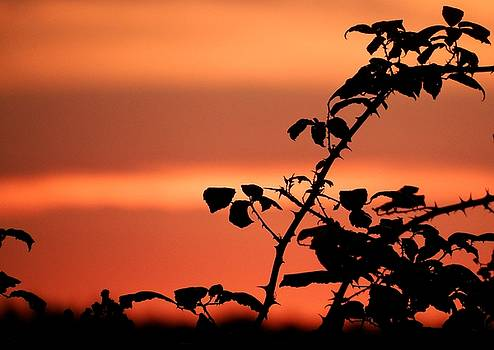 Autumn Sunset by Lens Artist