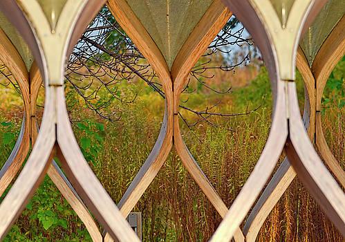 Autumn Symmetry by Nate Heldman