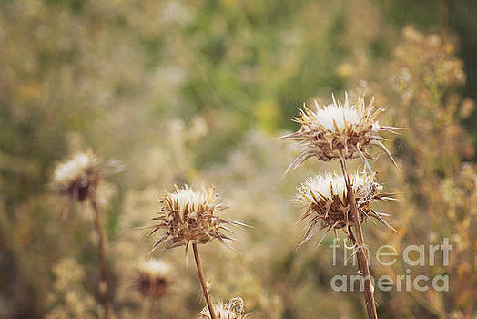 Autumn thistles by Cindy Garber Iverson