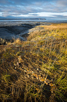 Autumn Tide Line by Tim Newton