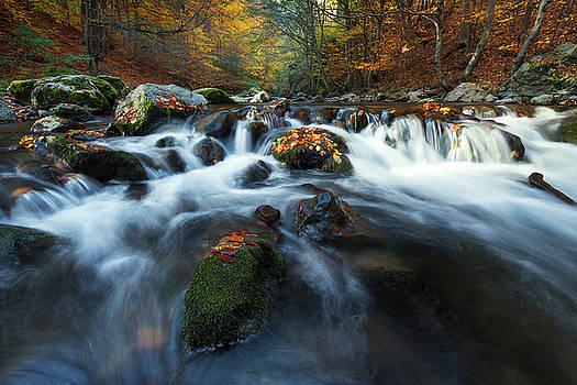Autumn by Toma Bonciu