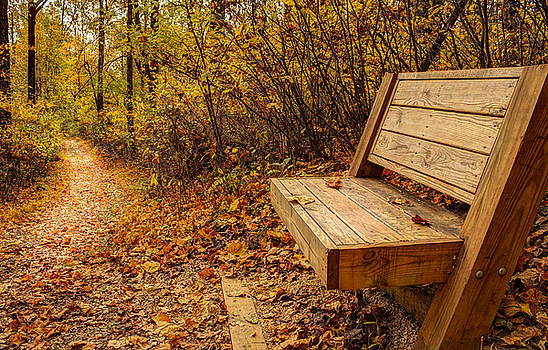 Autumn Trail and Bench by Andrew King