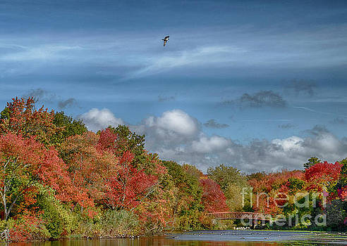 Autumn Tranquility by Judy Hall-Folde