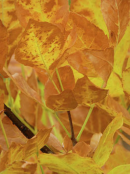 Autumn Treasure by Cris Fulton