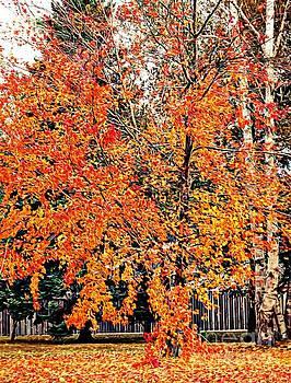 Autumn Tree by Becky Kurth