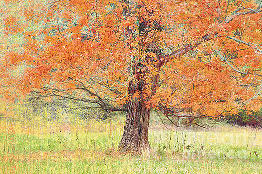 Autumn Tree by Geraldine DeBoer