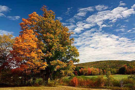 Autumn Tree on the Windham Path by Nancy De Flon