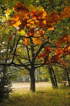 Autumn tree by Roman Aj