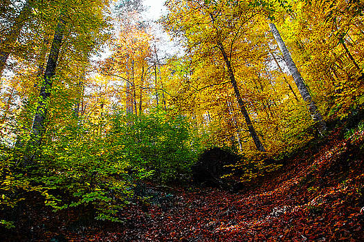 Autumn Trees at The Forest by Freepassenger By Ozzy CG