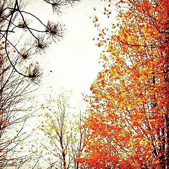 Autumn Trees (brighter, More Colorful by Amanda Richter