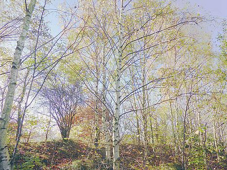 Autumn Trees by Carol Lynch