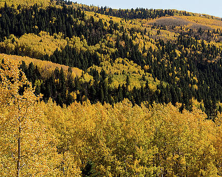 Autumn Trees, Conejos County, CO by Troy Montemayor