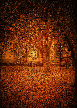 Autumn Trees  by Andrew Hunter