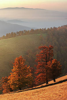 Autumn trees in Carpathians by Sergey Ryzhkov