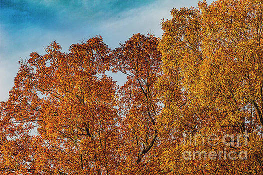 Doug Berry - Autumn Trees in Chesterfield 0498T